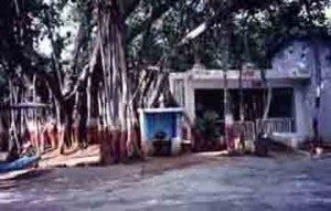 Nadiad Ashram Banyan Tree where Mota would chant Hari Om